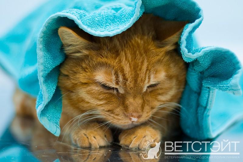 Чем лечить кошку, если она