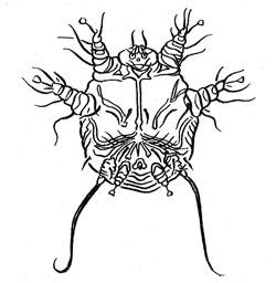Чем полезны каши для нашего организма, Каменское Новости Днепродзержинск газета Событие 41